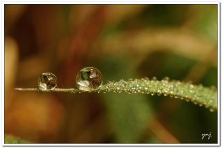 Balancing water drops on a green leaf