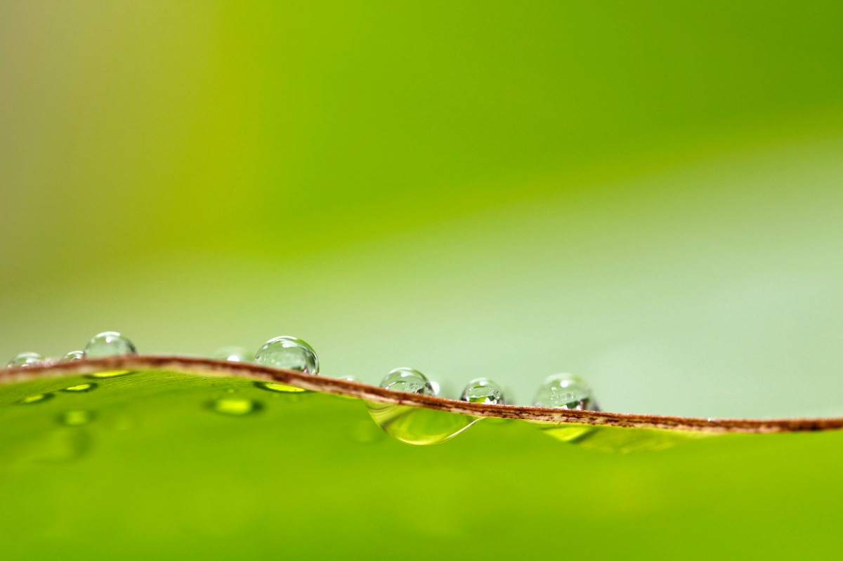 Leading Change, We need more Transparency: drops of water on a green leaf against a green background