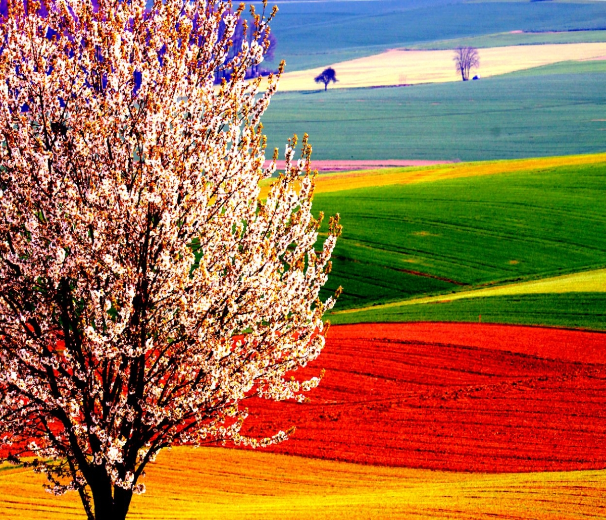 Blosseming tree in Tuscany landscape with bright red, green, and yellow colors