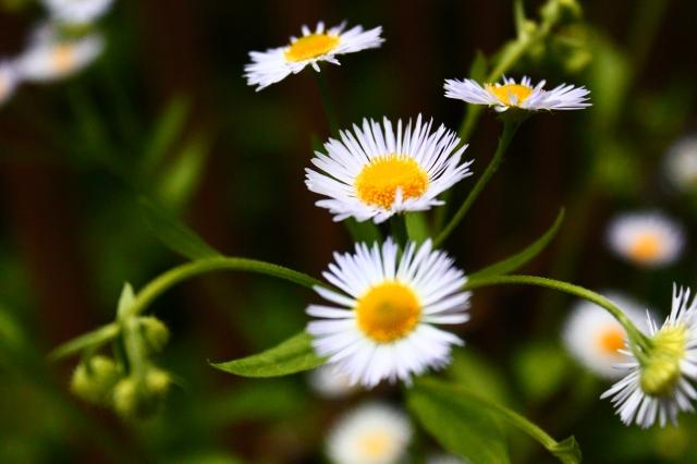 Leading change, Leadershipwatch, nature, flowers